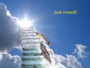Fish Ladder to Homeolog Heaven